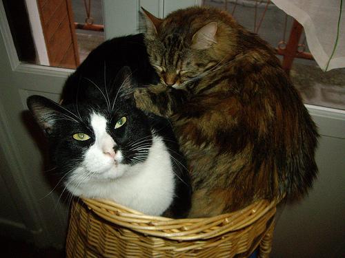 Способы хранения кошек фото 18