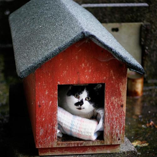 Способы хранения кошек фото 19