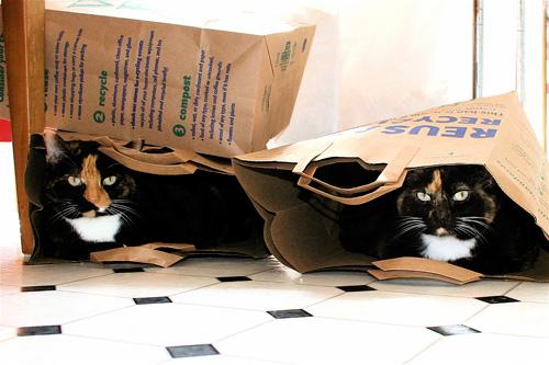 Способы хранения кошек фото 21