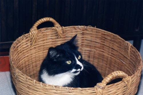 Способы хранения кошек фото 23