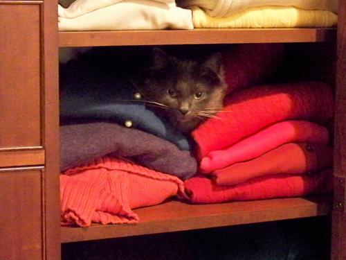 Способы хранения кошек фото 28