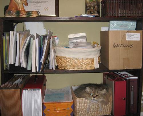 Способы хранения кошек фото 32