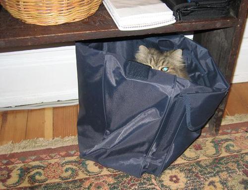 Способы хранения кошек фото 33