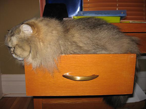 Способы хранения кошек фото 34