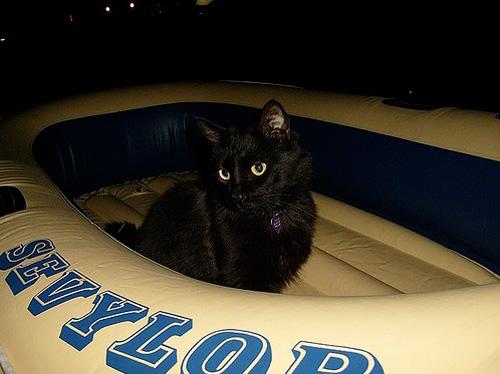 Способы хранения кошек фото 38