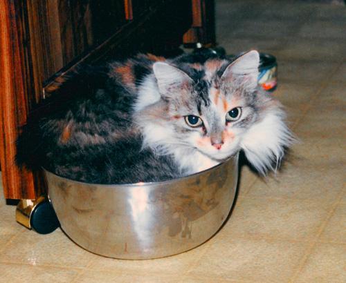 Способы хранения кошек фото 40