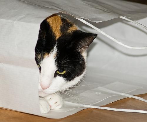 Способы хранения кошек фото 41