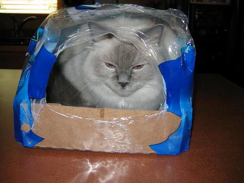 Способы хранения кошек фото 42