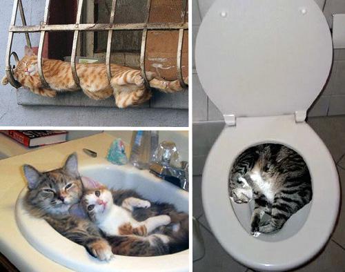 Способы хранения кошек фото 49