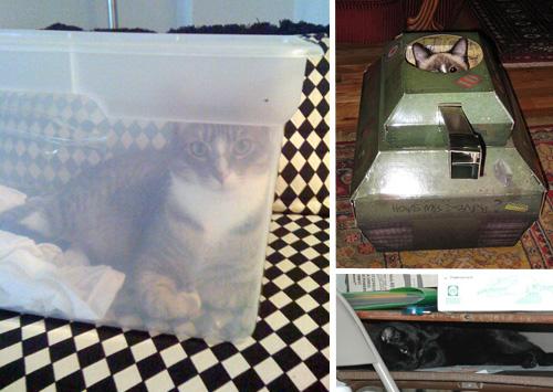 Способы хранения кошек фото 54