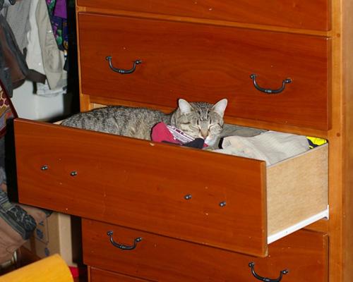 Способы хранения кошек фото 58