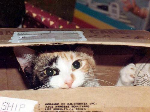 Способы хранения кошек фото 64