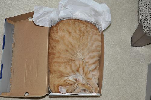 Способы хранения кошек фото 66