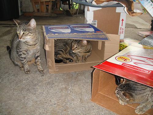 Способы хранения кошек фото 78