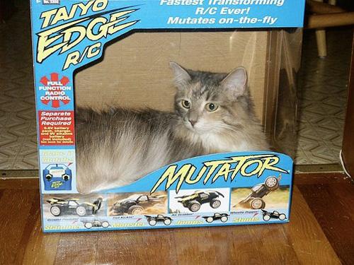 Способы хранения кошек фото 79