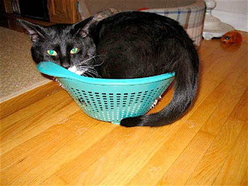 Способы хранения кошек фото 83