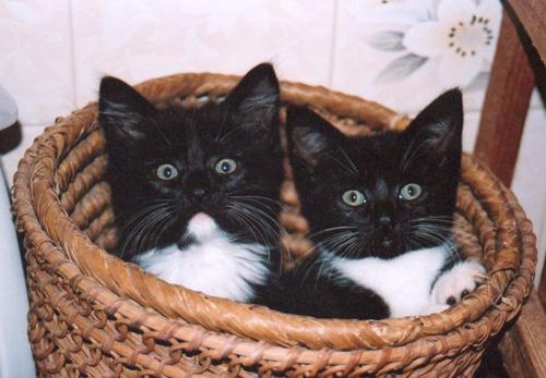 Способы хранения кошек фото 85