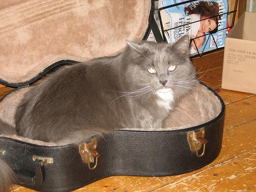 Способы хранения кошек фото 92