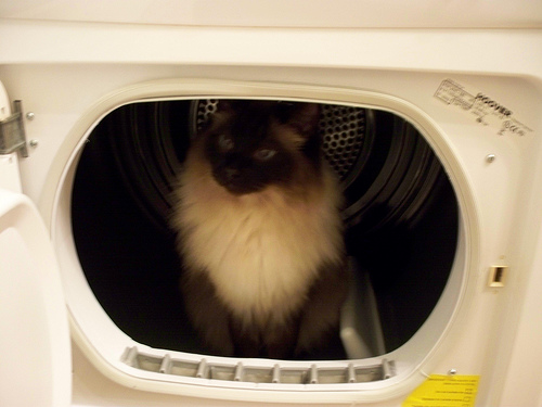 Способы хранения кошек фото 96