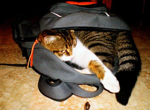 Способы хранения кошек фото 97