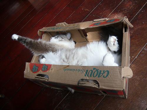 Способы хранения кошек фото 98