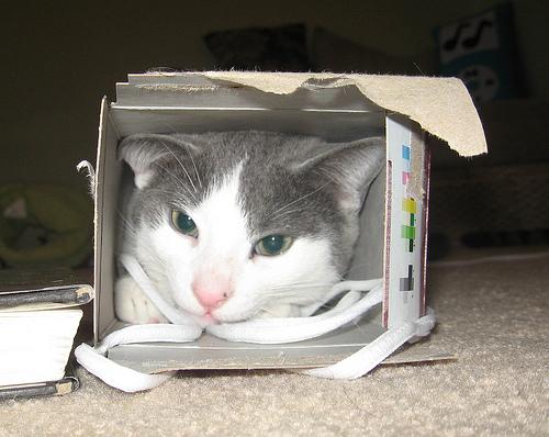 Способы хранения кошек фото 99