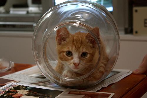 Способы хранения кошек фото 102