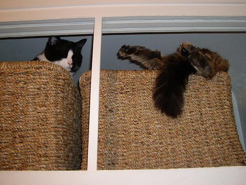 Способы хранения кошек фото 105