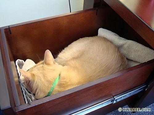 Способы хранения кошек фото 108