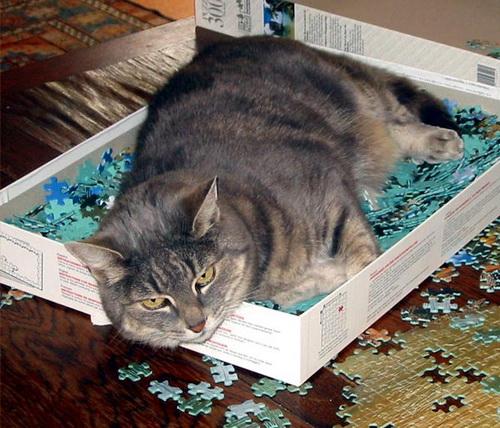 Способы хранения кошек фото 109