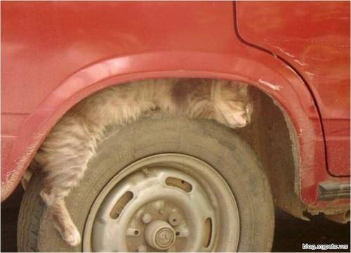 Способы хранения кошек фото 110