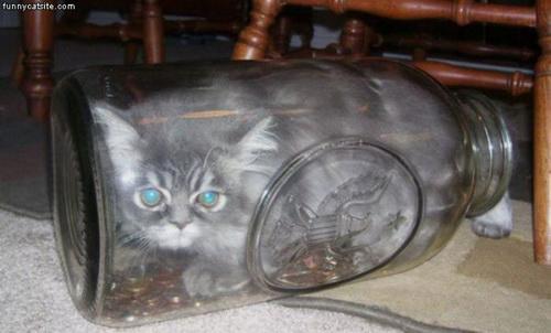 Способы хранения кошек фото 113