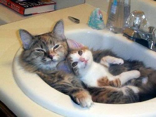 Способы хранения кошек фото 115