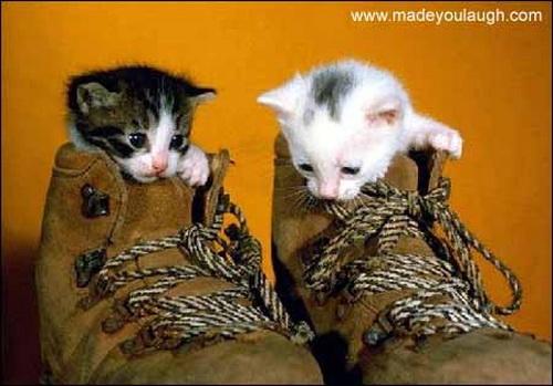 Способы хранения кошек фото 116