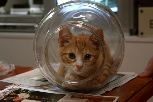 Способы хранения кошек фото 0