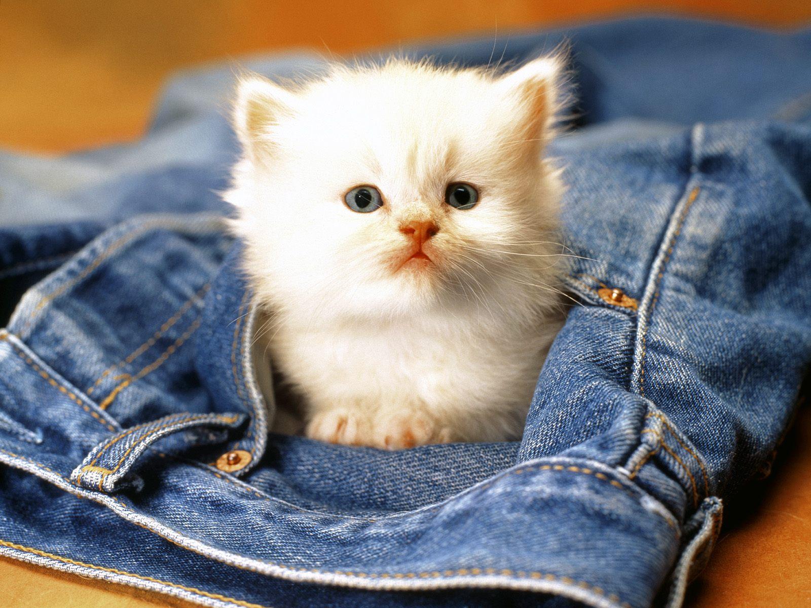 Доброе, картинки милые смешные кошки