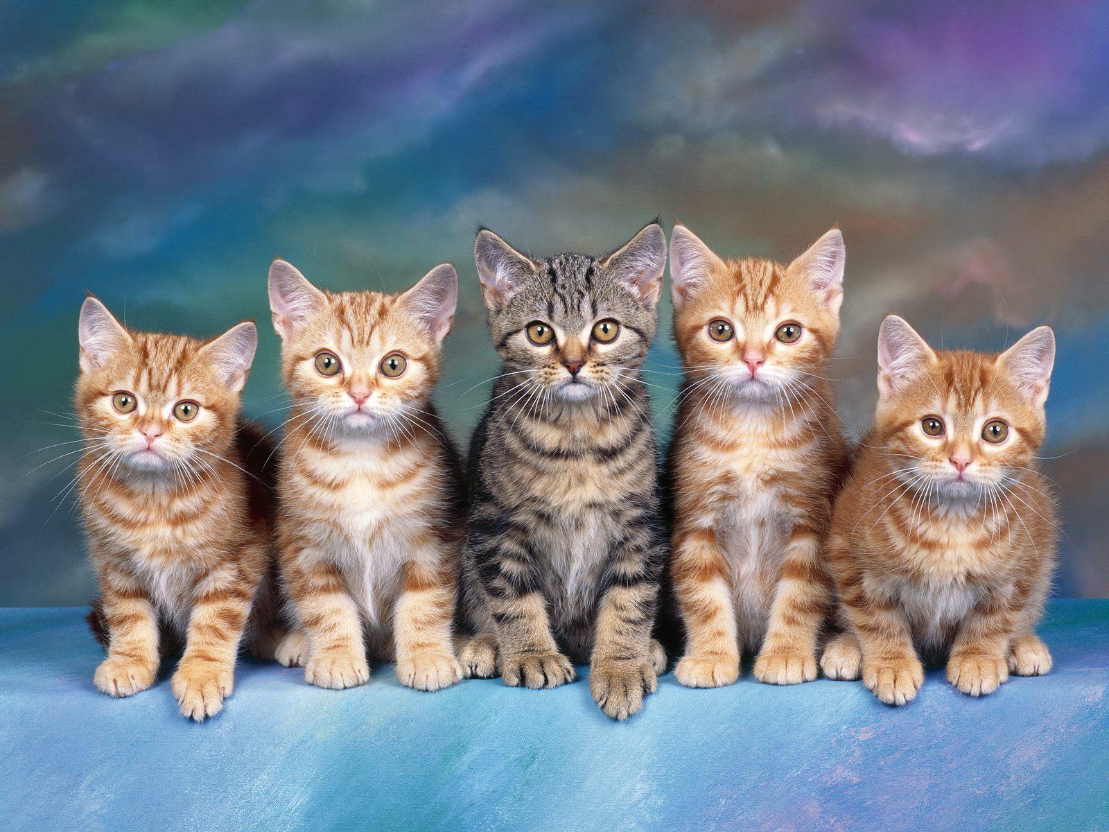 несколько фотографий одного котенка всех существующих