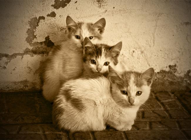how to make a kitten an indoor outdoor cat