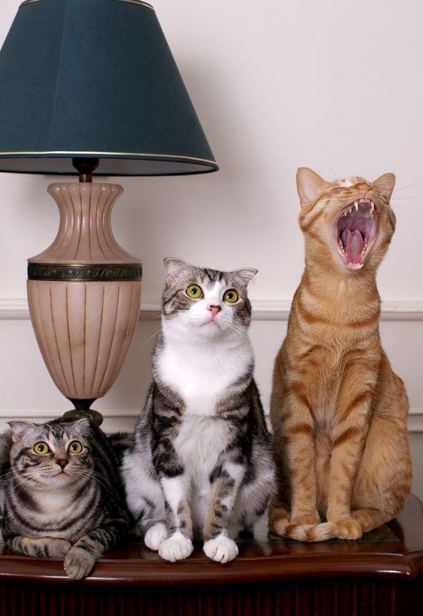 Начальницы днем, прикольные картинки с кошками и котами