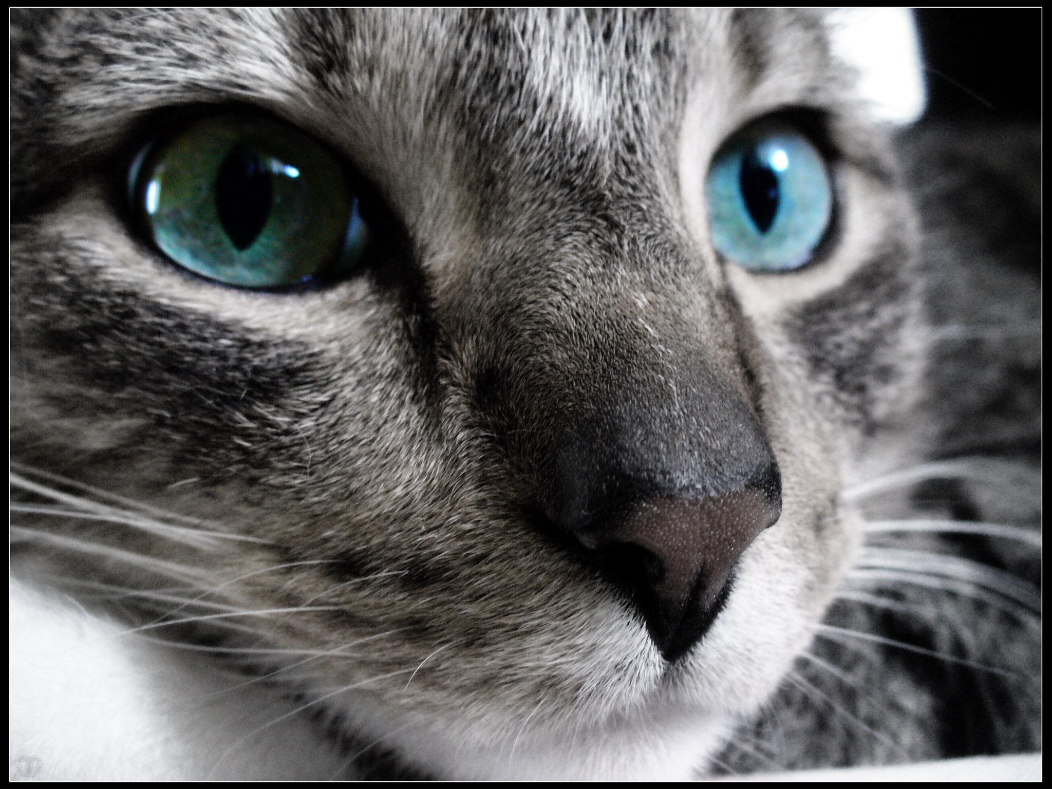 На рабочий стол кошки на рабочий стол