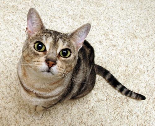 Красивые и профессиональные фото котов 29