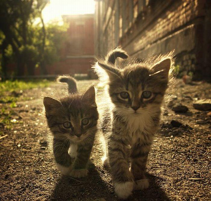 Картинки красивых кошек с надписью
