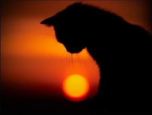 Кошки  фото 3