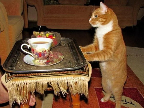 Кошки  фото 8
