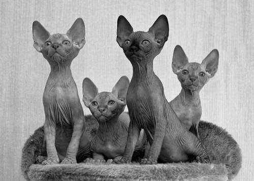 Кошки  фото 11
