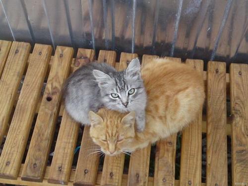 Кошки  фото 15