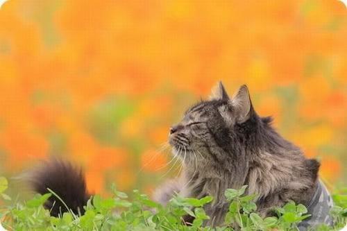 Кошки  фото 27