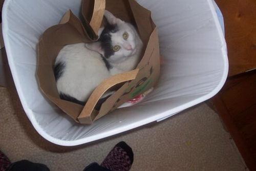 Кошки  фото 31