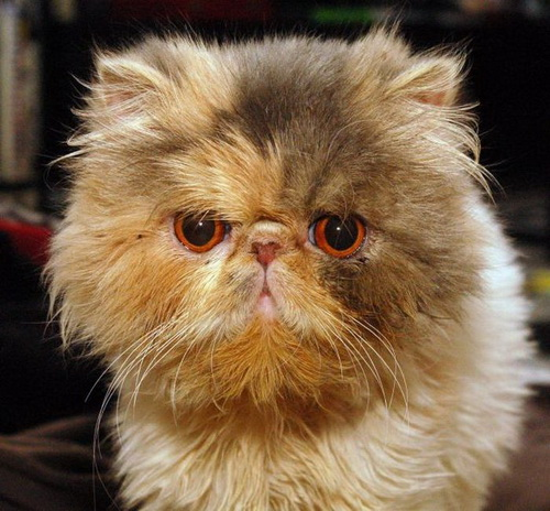 Кошки  фото 34