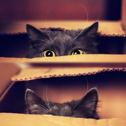 Кошки  фото 36